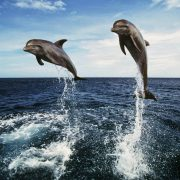 Explore South Bali Dolphin Cruise