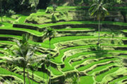 Discover Ubud Lovina 4Days 3Nights